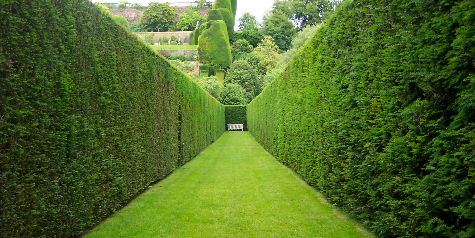 Creating hedges